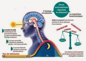 horloge circadien alimentation sport énergie