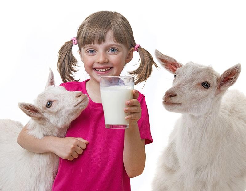lait chèvre bon pour croissance
