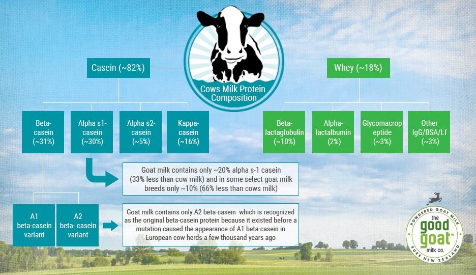 protéines lait vache allergique