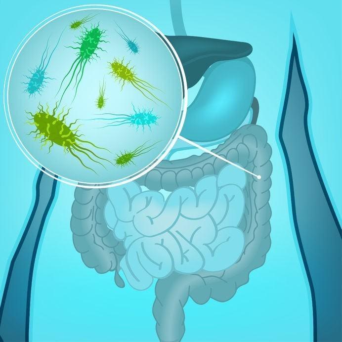 intestin micro-biome intestinal santé